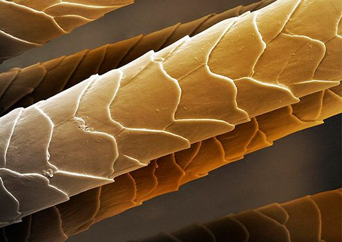 структура-волос.jpg